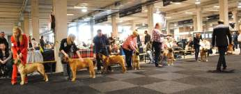 2016-04-13 Billy op de Dogshow in Utrecht (3 Uitmuntend) (2)
