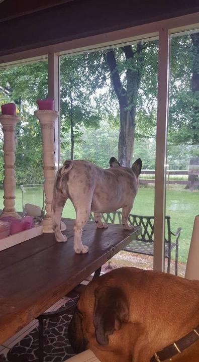 2016-05-23 Betsie kijkt of het nog regent buiten