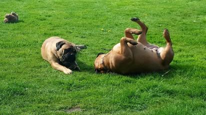 Babs in het gras