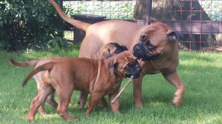 Babs met haar pups