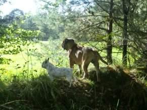 Bonke en Betsie