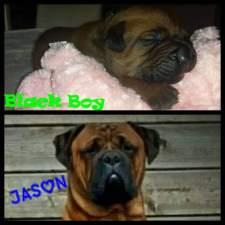 Jason 1 jaar