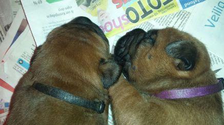 Pups 2 weken (12)