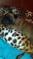 Pups 2 weken (7)