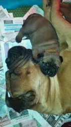 Pups 2 weken (8)
