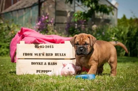 Pups 6 weken (2)