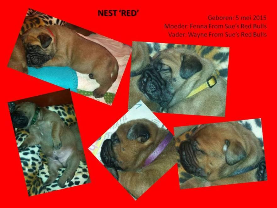 nest red